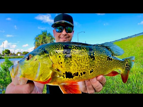 Peacock BASS Fishing With  -  Bryan TheCEO Monster Mikes Fishing Partner