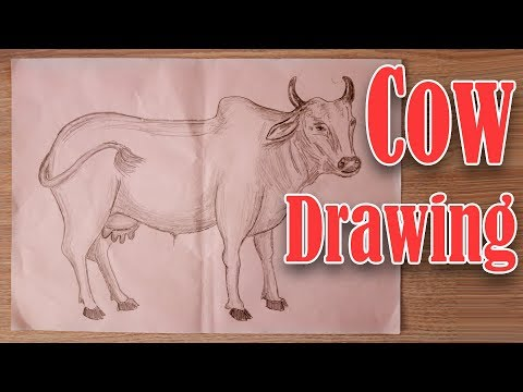 How To Draw || Cow Sketch Step by Step Tutorial For Kid thumbnail