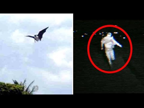 5 Cryptids That Could Exist | Sightings & Encounters