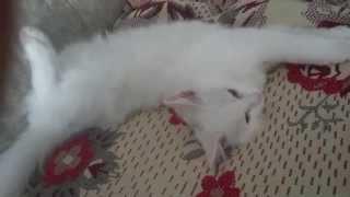 Кошачий сон с открытыми глазами