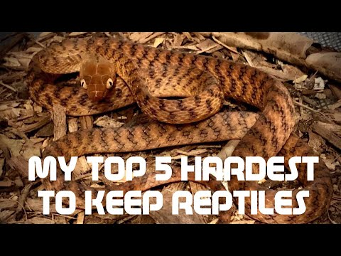 My TOP 5 HARDEST REPTILES To Look After!