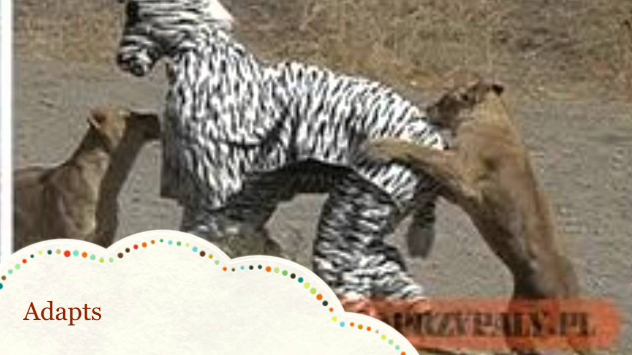 The True Facts About Zebras - YouTube