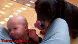 𝗚𝗮𝗺𝗲𝘀 ロットワイラー犬と赤ちゃんキスと遊ぶ幸せ一緒にコンパイル - 犬...