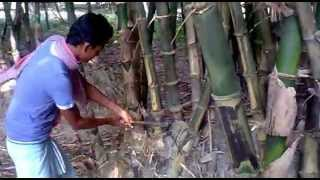 How to Cut the Tree in Village