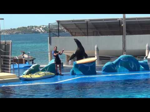 Dolphin Show at Marineland  Palma de Mallorca 2016