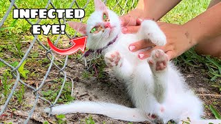 RESCUED BABY KITTEN FOUND WITH DEADLY EYE INFECTION!
