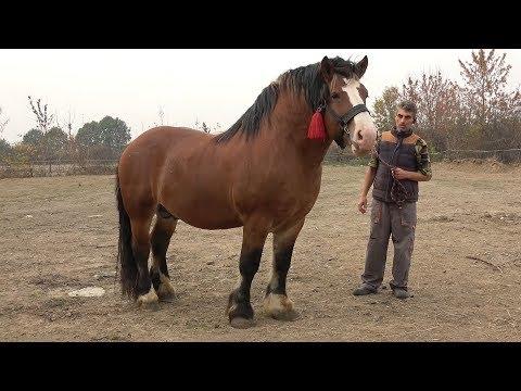 Caii lui Mircea de la Ruseni, Satu Mare 2018