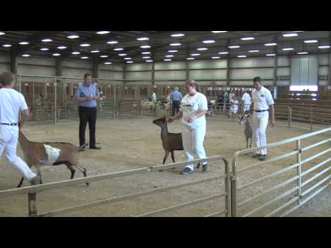 2015 Wyoming State Fair Dairy Goat Show