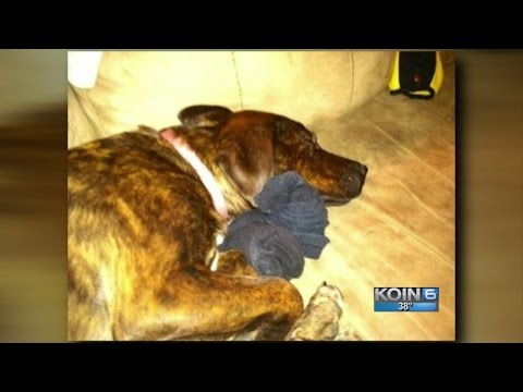 Rat Poison-filled Bread In Yard Kills WA Family Dog