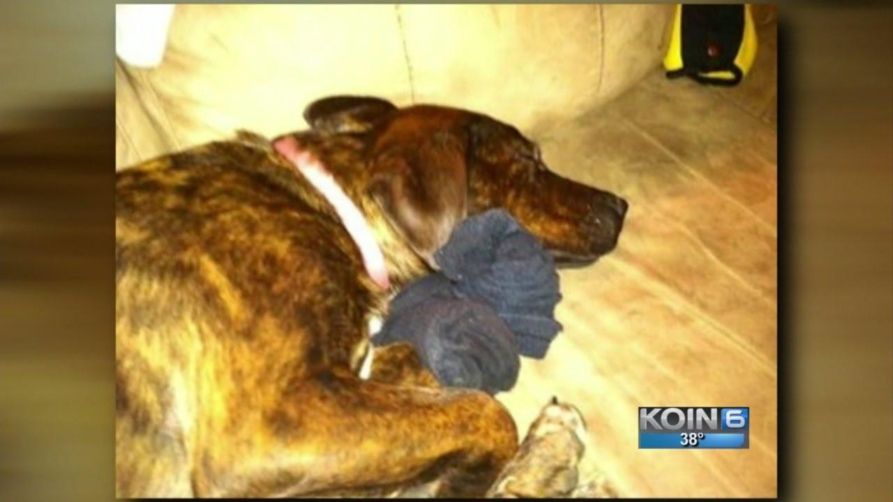 Rat poison-filled bread in yard kills WA family dog - YouTube
