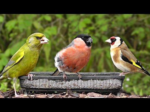 Comment fabriquer une mangeoire en bois pour les oiseaux - Solution pour eloigner les chats du jardin ...
