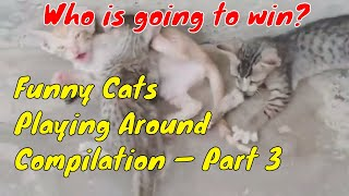 Funny Cats Playing Around Compilation — Part 3
