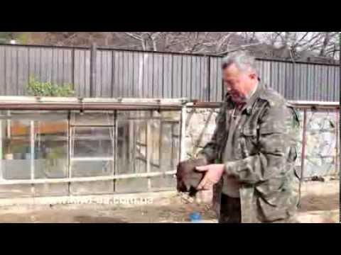 Питомник растений №1 в Украине! Питомник саженцев Гарди
