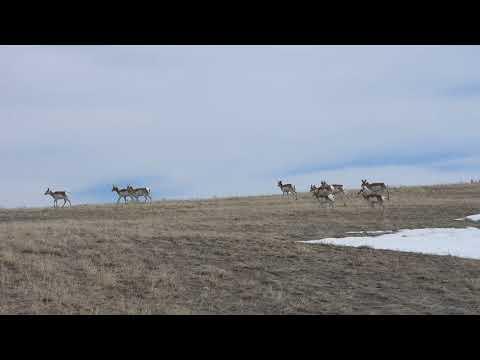Ice Free Wyoming?