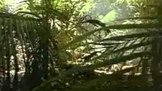 Tropical Forest Animals - Zwierzęta lasów tropikalnych