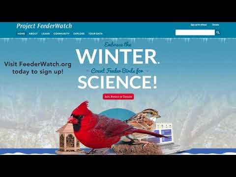 Live Q&A: Project FeederWatch's Dr. Emma Greig and Chelsea Benson Talk Bird Feeding