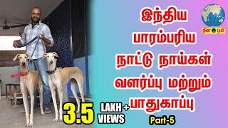 Chippiparai | இந்தியாவின் பாரம்பரிய நாட்டு நாய்கள் வளர்ப்பு | Indian Dog Breed Lover - Part 5