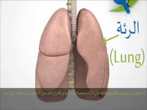 شرح عن الجهاز التنفسي 1