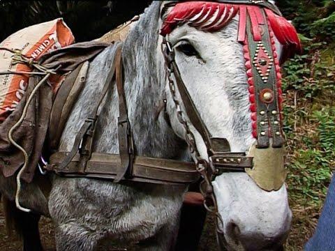 Tête de mule de Christophe Gatineau ( film complet - part. 1/2 )