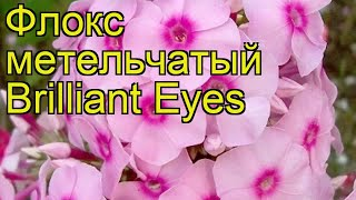 Флокс метельчатый Сверкающие глаза. Краткий обзор, описание phlox paniculata Brilliant Eyes