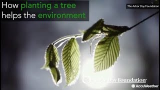 How planting a tree helps the environment