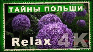 Природа Польши. Пение птиц для сна. Видео для релаксации. 4К Видео для сна. Польша летом