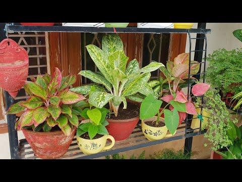 Indoor Plant Care Schedule - for Beginners    Fun Gardening