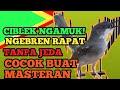 Ciblek Gunung Gacor Ngunci Untuk Masteran Murai Lb Kacer Pentet Dan Burung Lainnya  Mp3 - Mp4 Download