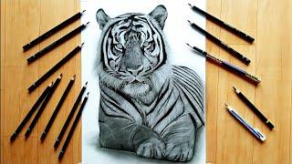 Drawing Tiger