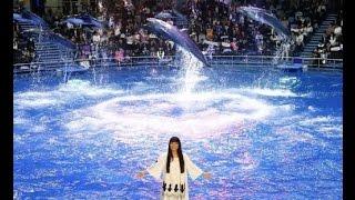 miwa、イルカと幻想的なコラボパフォーマンス。念願の飼育員にも挑戦で「夢のようです!」 三輪ひとみ 検索動画 30