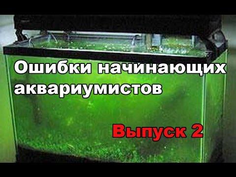 Ошибки начинающих аквариумистов. Выпуск 2