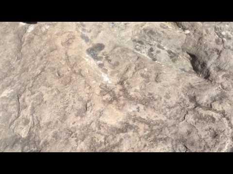 Josh Knox discusses the Dinosaur Tracks in Holyoke