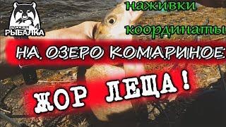 Жор Леща на озере Комариное   РУССКАЯ РЫБАЛКА 4  