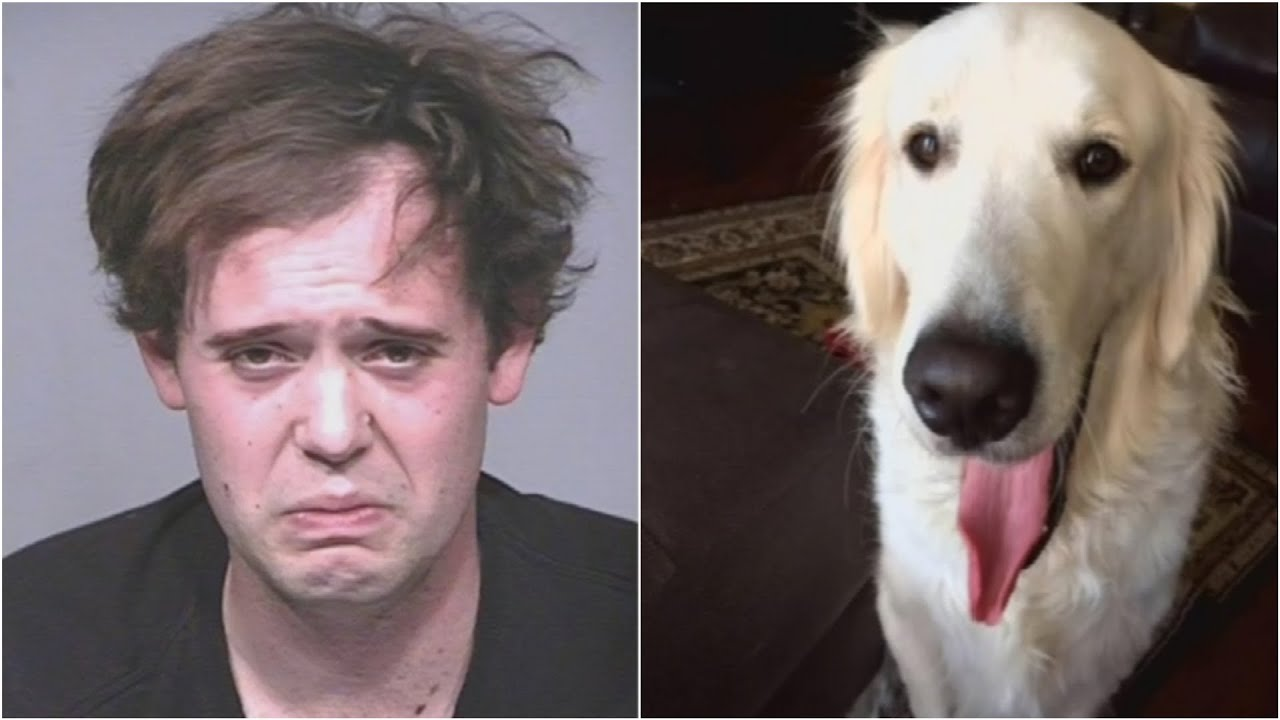 Service dog stabbed to death, allegedly by owner