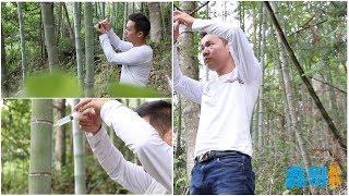 【鑫哥】竹子酒製作全過程,做好的酒有竹子的清香