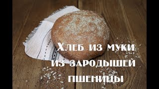Хлеб из муки из зародышей пшеницы. Вкусно и полезно .