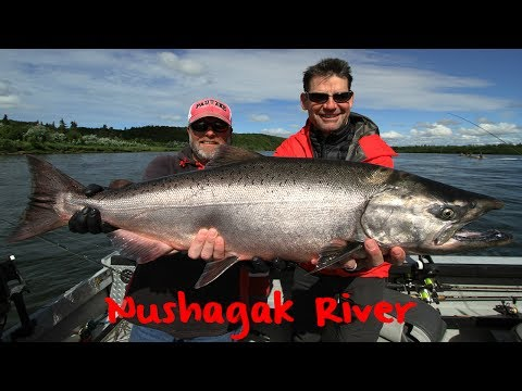 Chinook Salmon Fishing Alaska's Nushagak River