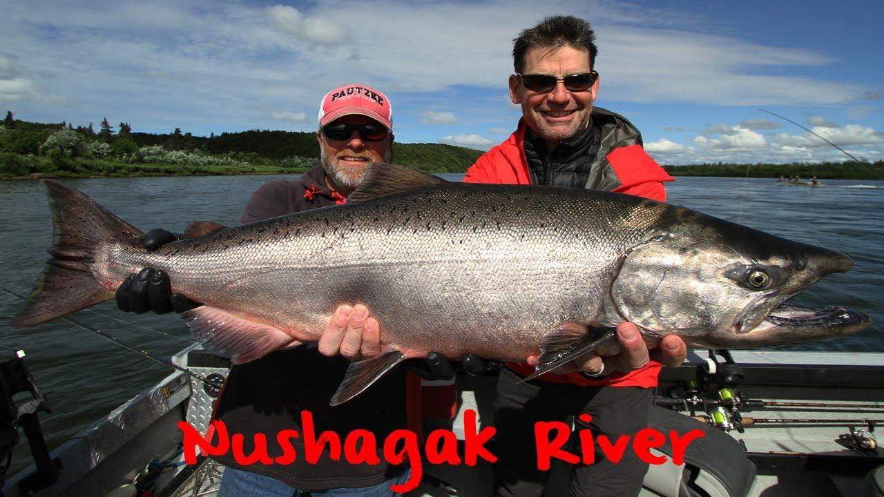 Chinook fish - salmon prince