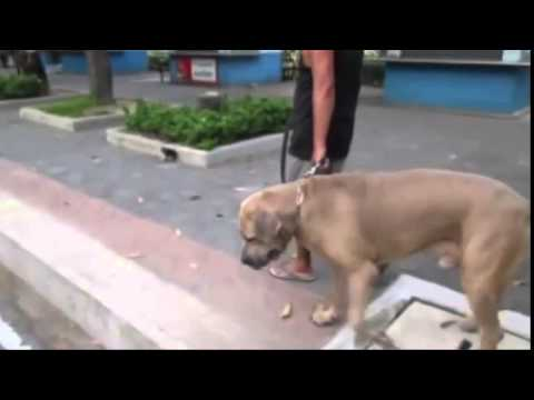 ★Cat female attacks a huge dog to protect her kitten. Great Mother!★