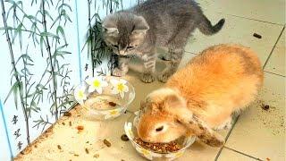 ЧТО БУДЕТ если кот Макс и кролик Баффи будут кушать вместе?