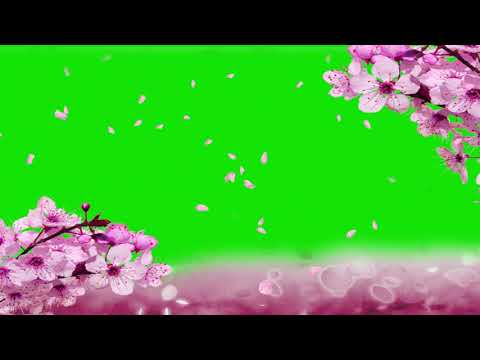 CHERRY BLOSSOMS GREEN SCREEN EFFECT thumbnail