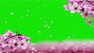CHERRY BLOSSOMS GREEN SCREEN EFFECT