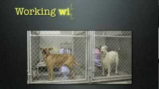 Working With Rescue Dogs: The Shelter Environment
