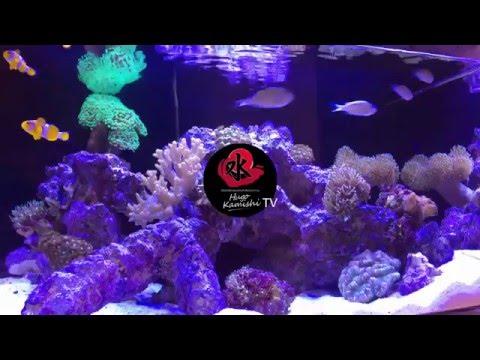 Hugo Kamishi MiTank Marine Acrylic Aquarium