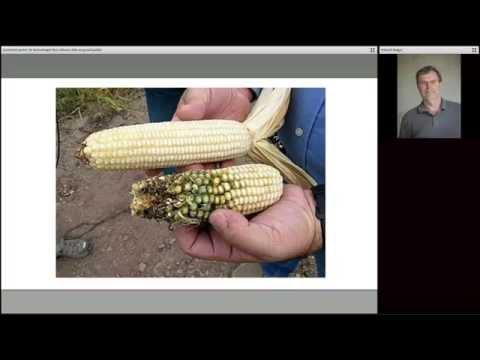 Webinaire : Comment parler de la technologie des cultures génétiquement modifiées au grand public