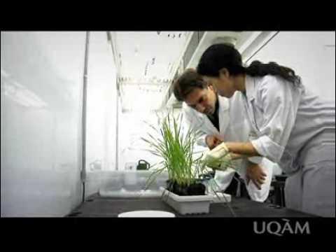UQAM.tv | Bac en biochimie de l