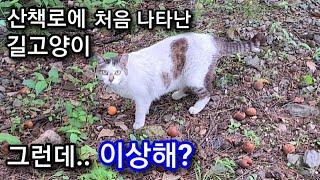 산책로에 처음 나타난 길고양이, 그런데.. 이상해?