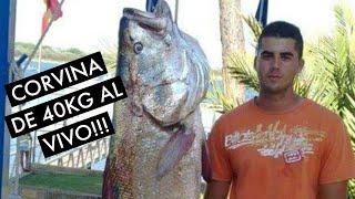 Corvina de 40 kilos capturada al vivo !