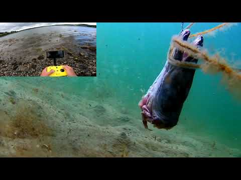 FIRST IN THE WORLD! An Underwater Drone Feeds Animals - Fish & Crabs With A CONGER EEL Head.