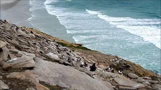 Falkland Islands' unique ecosystem